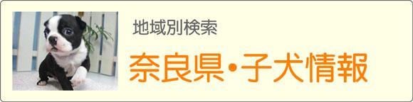 奈良県ブリーダーの子犬販売情報検索