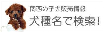 関西(近畿)の子犬販売情報を犬種名で検索