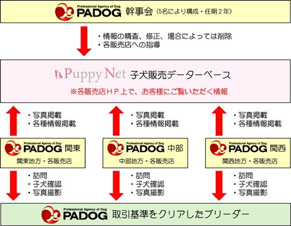PADOG子犬掲載の流れ
