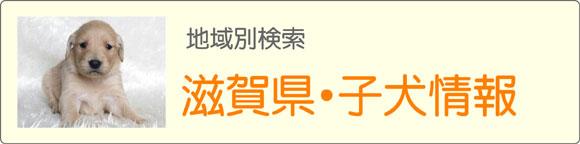 滋賀県ブリーダーの子犬販売情報検索